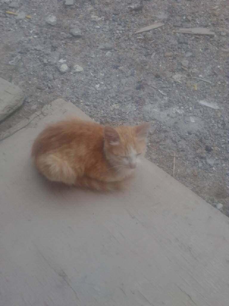 小猫炖蘑菇