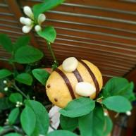 宝宝最爱的小蜜蜂豆包