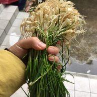 野葱海蛎煎(千里香)