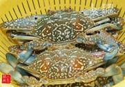 香辣花蟹,4汤匙