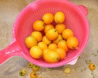 蜂蜜金桔茶,金桔清水冲洗下,接满水,加盐浸泡30分钟,冲洗干净沥干。