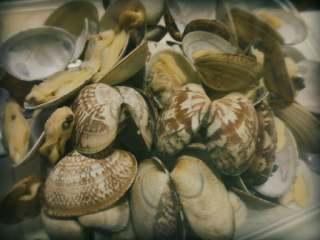 花蛤肉炒韭菜,花蛤洗净,在开水里汆一下,点少许料酒去腥,待开口就捞上来。