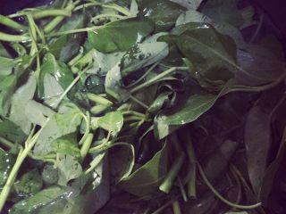 凉拌空心菜,烧水将折好的空心菜放下去煮三十秒至一分钟左右即可捞起、将水沥干