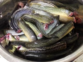 耙泥鳅,新鲜泥鳅去头去内脏,加入适量盐反复搓洗,去除泥鳅表面的滑液。然后清洗干净,沥水后加入两勺料酒腌制。