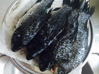 产妇催奶滋补鲫鱼豆腐汤,<a style='color:red;display:inline-block;' href='/shicai/ 377/'>鲫鱼</a>洗净控水,鱼腹内侧黑色表皮去除,不然很腥,如果留有鱼籽,可保留催奶效果更佳。