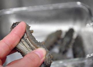#八珍盛宴#醉美食光繁如花之啤酒海参虾,清洗海参。顺着海参底部的小孔剪开整个腹部,去掉头部的沙嘴。并将海参内壁上的白筋成段剪开,但不要减掉,然后整个清洗干净即可。据说里面的白筋更有营养,剪成段后的海参还会发的再大些。
