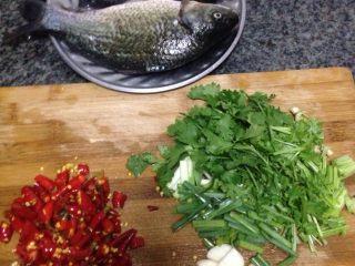 烧鲫鱼,鲫鱼洗净抹盐腌一会,辣椒,葱姜蒜、香菜切好备用