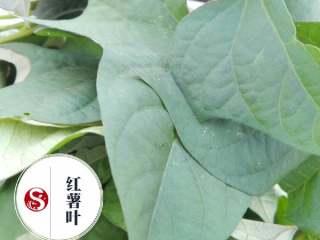 蔬菜皇后~~番薯叶,新鲜采摘