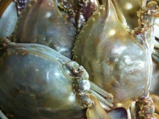 姜葱炒蟹,梭子蟹用小刷子仔细擦洗干净后切块