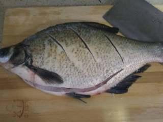 葱油鳊鱼,在鱼背上正反面划几刀(因鱼背较厚,水煮时快速熟透),脊椎骨不要切断。