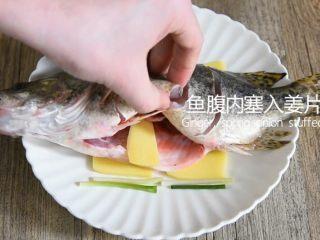 鲜上加鲜的做法——清蒸桂鱼,鱼腹内塞入姜片、葱段