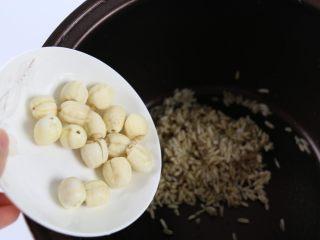 银耳莲子燕麦粥,加入莲子。