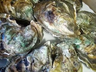 水蒸海蛎子+#人民的美食#,海蛎子用刷子处理干净,蒸8~10分钟,如果比这个小,可以缩短蒸的时间,5~8分钟