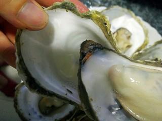 水蒸海蛎子+#人民的美食#,用手轻轻掰开,壳很容易打开,里面汤不能倒掉哦这个你可以试下非常鲜美,如果汁很多可倒出来一点另外喝