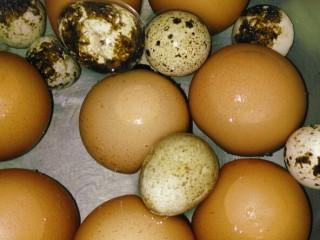 立夏的固肾食方:#核桃壳分心木煮鸡蛋#(创建于5/5~2017),小汤锅注入水和放入鸡蛋和鹌鹑蛋,用中小火烧开,转小火煮5分钟,关火,焖3分钟。