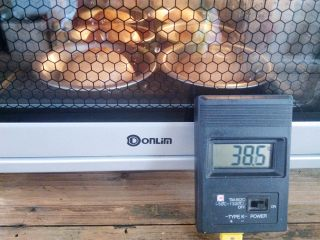 番茄咸肉面包,面团放入烤箱,选择发酵程序,实测温度38.5℃,时间35分钟