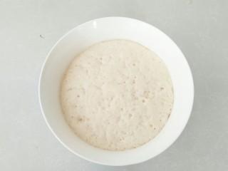中种牛角包,面团发酵完成,成中种面团。
