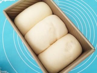 中种吐司,盖上保鲜膜,温暖处发酵9分满,擀面团的时候幹反了,所以表面略有不光滑。