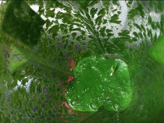 虎皮菠菜蛋糕卷,煮好的菠菜放入料理机中,加入50克水搅打成菠菜泥。