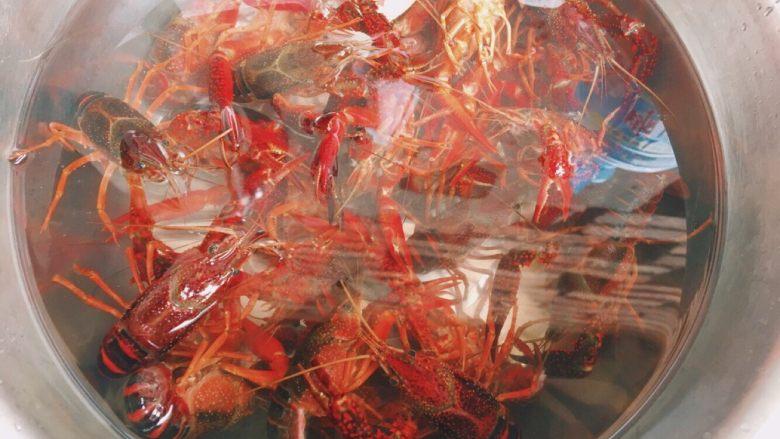 川味儿麻辣小龙虾,<a style='color:red;display:inline-block;' href='/shicai/ 285'>小龙虾</a>用水泡一会儿 用刷子刷干净腹部并去掉虾肠