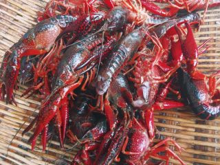 川味儿麻辣小龙虾,用剪刀在背部开一个口子 会更加入味