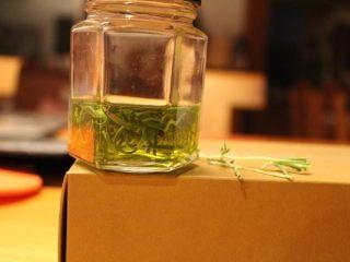 迷迭香佛卡夏,将迷迭香叶放入初榨橄榄油,隔夜备用。