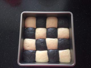 黑白小熊挤挤包,烤盘里的面团第二次发酵好。
