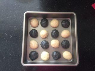 黑白小熊挤挤包,将16克的小面团搓圆,表面搓光滑,搓好的面团直接放进不粘烤盘里,有距离的摆好,进行第二次发酵。