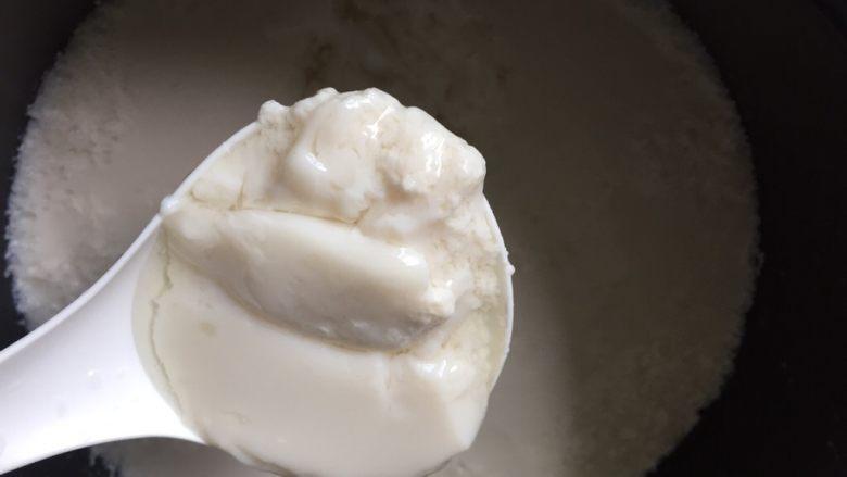 自制爽滑豆花,一刻钟时间刚刚还是液体的豆浆就变成嫩嫩的豆花了。