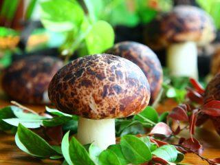 仿真蘑菇包,是不是很逼真