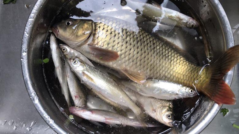 酱烧鲤鱼,新鲜的一盆野生鱼