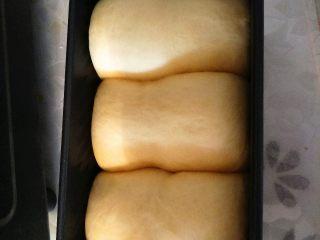 全蛋吐司,土司盒放入烤箱发酵40分钟。到8分满就可以取出。