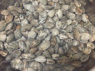 辣炒花蛤,花蛤买回来后,洒入少许盐,放在一个安静的地方吐沙至少半天,买的时候尽量买已经吐的干净一些的!