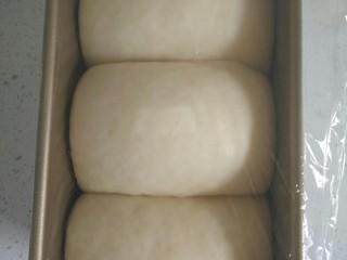 金砖土司,发酵至8分满时取出。(我这个已经发至9分满了,顶住保鲜膜了,盖盖子的时候需要用手将面团压一下。否则会把面团拉破,其实能够9分满更好)