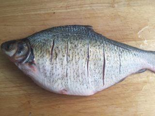 葱油鳊鱼,如图割刀,是因为鳊鱼背部这一块没刺,肚子这一块鱼刺长但少。所以我一般这样分开,方便我家对鱼刺不同敏感度的三口人,可以按需享用(毋庸置疑,我是专吃鱼尾的,😄)