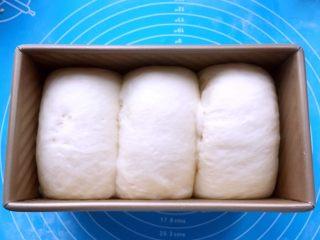酸奶吐司(一次发酵法),约50min,面团发酵至吐司盒八分满