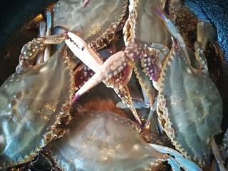 锅烀螃蟹,去掉腿上的皮筋,洗完摆在锅里,壳向上摆。