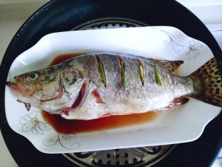 #味道鲜美的#清蒸桂鱼,腌制好的桂鱼从冰箱取出,把保鲜膜去掉,隔水蒸13-15分钟即可。(时间也要根据鱼的大小来增减,我的是580g的鱼,我蒸了15分钟)关火后闷5分钟。