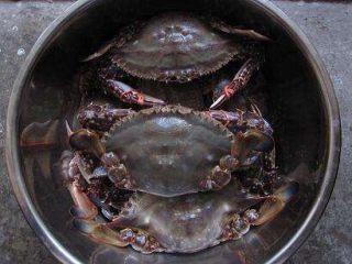 清蒸海飞蟹,海飞蟹放入锅中清洗,也就是刷刷盖