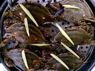 清蒸海飞蟹,均匀撒上姜丝,少许盐。因为海蟹本身特别鲜,所以不要放其他调料,以免掩盖海蟹原有的鲜味