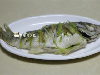 清蒸鲈鱼,蒸好后,将蒸熟的葱姜等拣出丢弃不用
