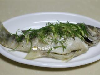 清蒸鲈鱼,将切好的葱姜丝放在鱼身上