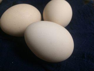 冷萃咖啡蛋糕卷,鸡蛋