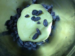 葡萄干奶酥,加入葡萄干继续揉面,揉匀为止