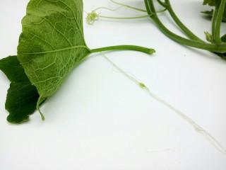 #甜味#农家小炒  南瓜与南瓜叶的相遇,撕去南瓜叶的筋膜