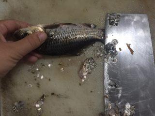椒盐鲫鱼,第一步,去鳞,从下往上刮,这样鱼鳞就会全部掉落,一定要小心手