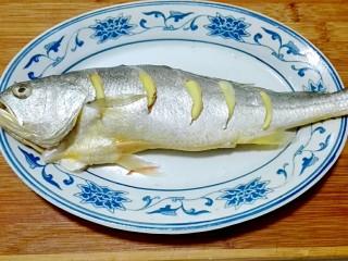 披红戴绿的蒜香红辣椒蒸黄鱼,腌制时间到,在鱼身上的每道切开上面塞一片姜片,肚子里面和鱼下面都放姜片
