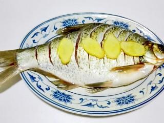 红红火火~清蒸鳊鱼,鱼身下,鱼肚,鱼背都放姜片