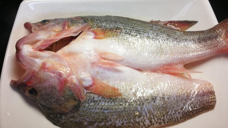 千张鲈鱼,腌制好的鲈鱼平铺在千张丝上放
