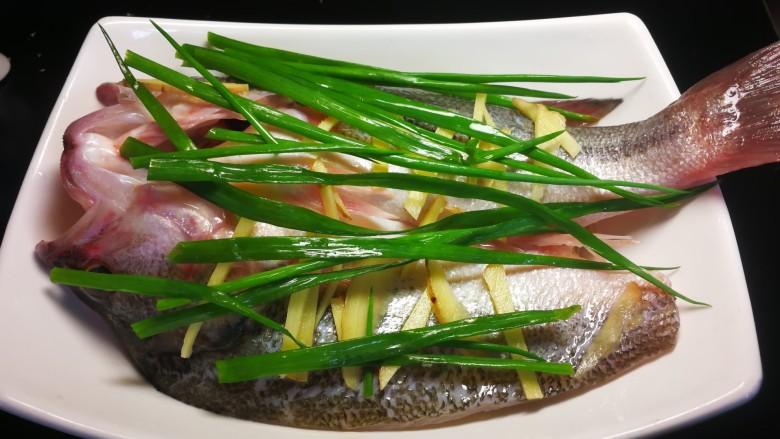 千张鲈鱼,葱前段和剩下的姜片切丝放在鱼的上当。锅内放水烧开,水开后把鱼放入大火7分钟关火闷一分钟